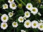 veseloe flower 18