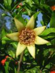 veseloe flower 20