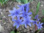veseloe flower 23