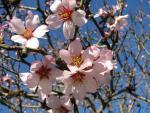 veseloe flower 30