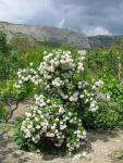 veseloe flower 33
