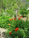veseloe flower 34