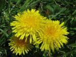 veseloe flower 4