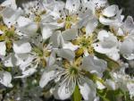 veseloe flower 8