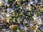 veseloe sneg