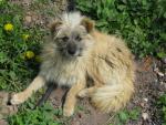 veseloe dog 1
