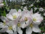 veseloe flower 14