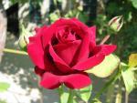 veseloe flower 25