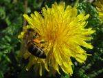 veseloe flower 3