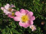 veseloe flower 38