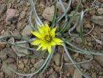 veseloe flower 6
