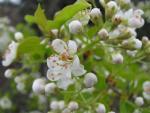 veseloe flower 7
