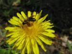 veseloe flower 9